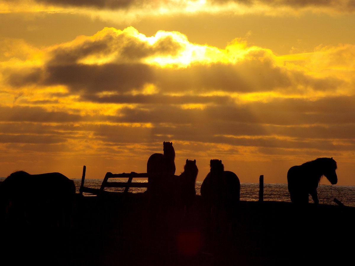 Island Zauberhafter Norden Im Herbst Elch Adventure Tours
